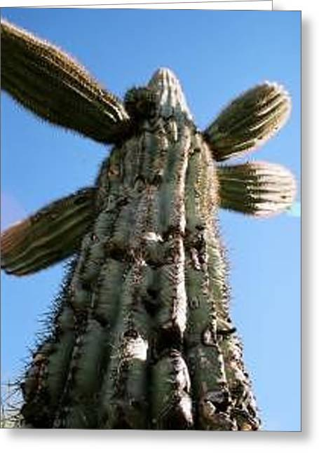 Saguaro Daddy Greeting Card by Kevin Igo