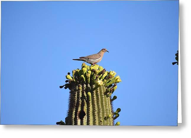 Saguaro Dove 1 Greeting Card