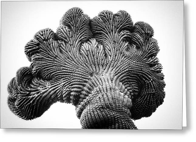 Saguaro Elephant Ear Greeting Card by Rusty Childress