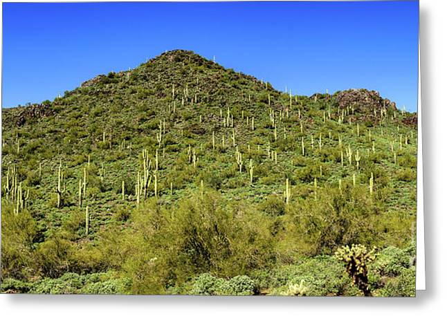 Saguaro Hillside Greeting Card
