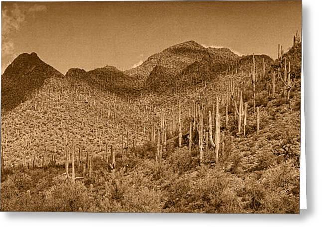 Saguaro Hillsides Tint  Greeting Card