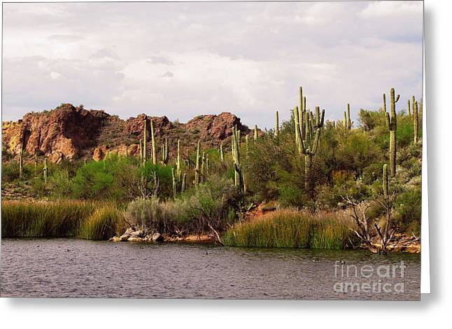 Saguaro Lake Greeting Card by Marilyn Smith