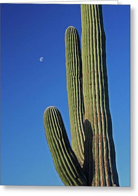 Saguaro Moon Greeting Card