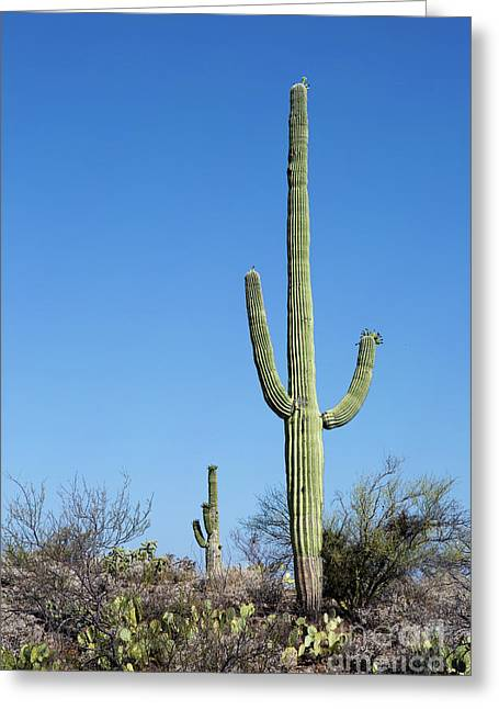 Saguaro National Park Arizona Greeting Card