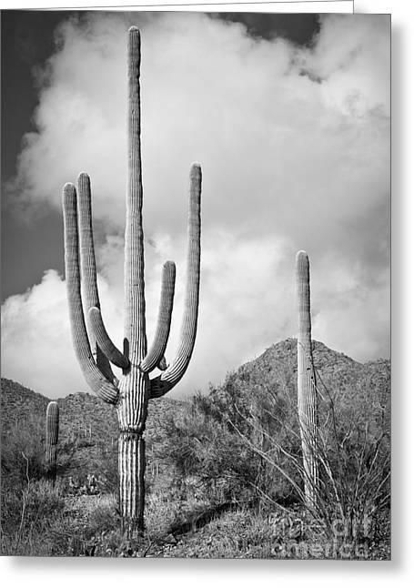 Saguaro Greeting Card