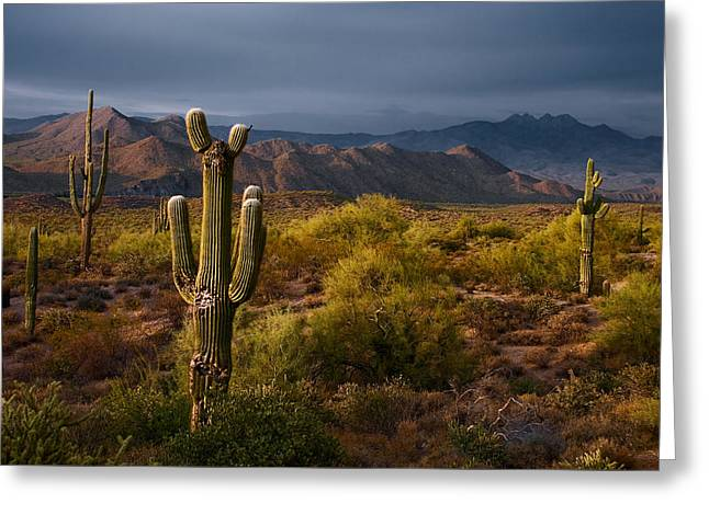 Saguaro Sunset At Four Peaks Arizona Greeting Card