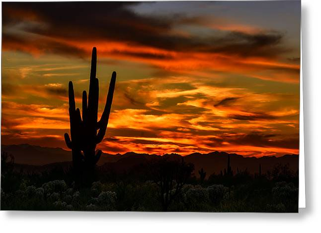 Saguaro Sunset H51 Greeting Card