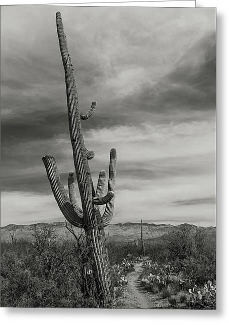 Saguaro Trail Greeting Card by Joseph Smith