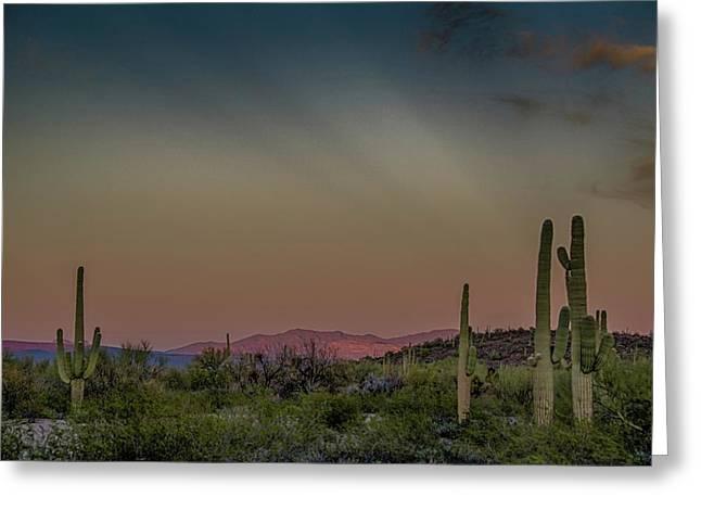 Saguaros Salute Rays Rising Greeting Card