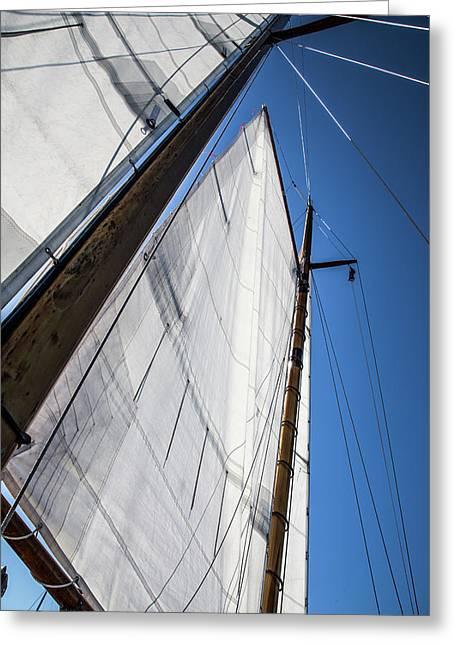 Sail Away Greeting Card by Karol Livote