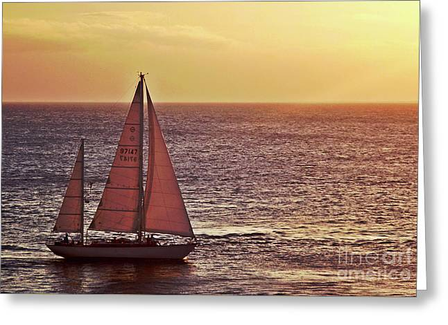 Sail Away Greeting Card by Maria Arango