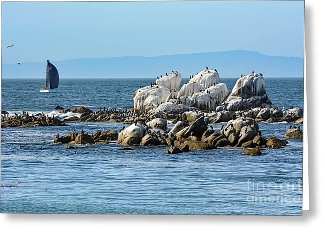 Sailboat At Bird Rock Greeting Card