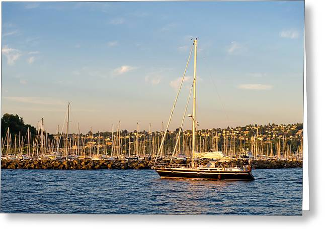 Sailboat Marina Greeting Card by Tom Dowd