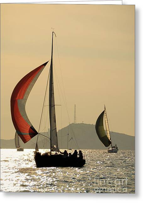 Sailboats In Water Greeting Cards - Sailboats at sunset navigating Greeting Card by Sami Sarkis
