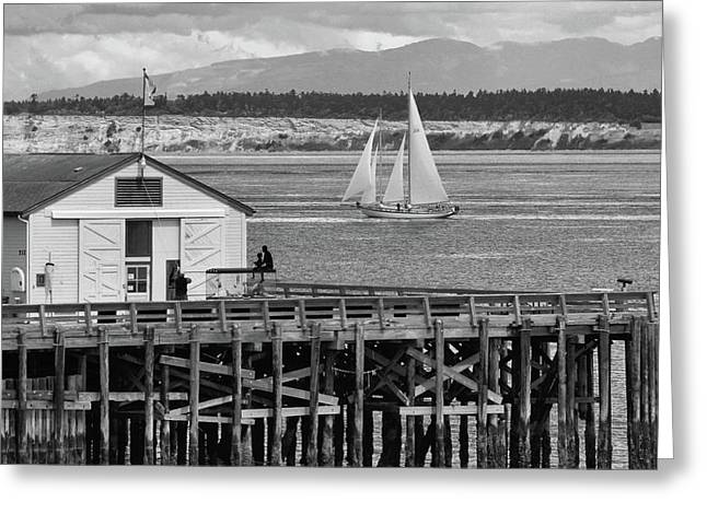 Sailing At Neah Bay Black And White Greeting Card by Dan Sproul