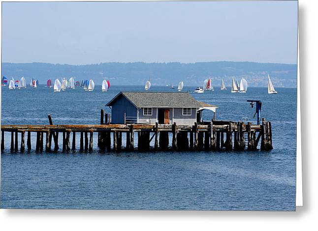 Sailing At Penn Cove Greeting Card by Mary Gaines