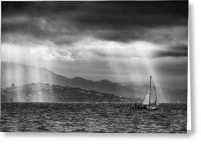 Sailing In Black And White Greeting Card by Laura Macky