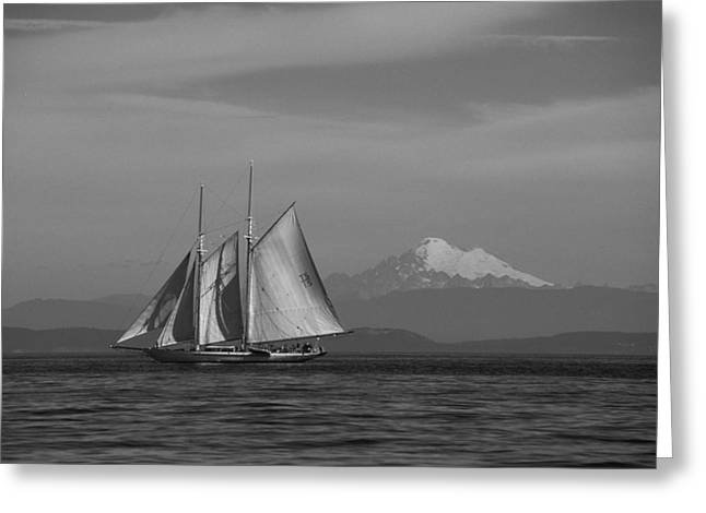 Sailing In Pacific Northwest Greeting Card