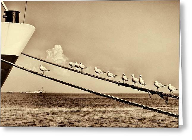 Sailors V2 Greeting Card