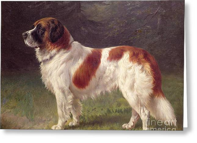 Doggy Greeting Cards - Saint Bernard Greeting Card by Heinrich Sperling