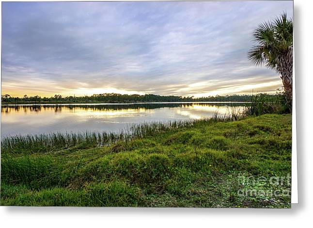 Saint Lucie Nature  Greeting Card by Liesl Marelli