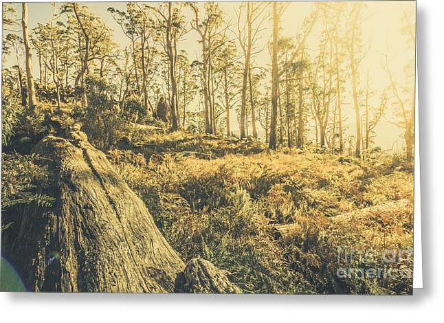 Saint Marys Pass State Reserve Forest Greeting Card by Jorgo Photography - Wall Art Gallery