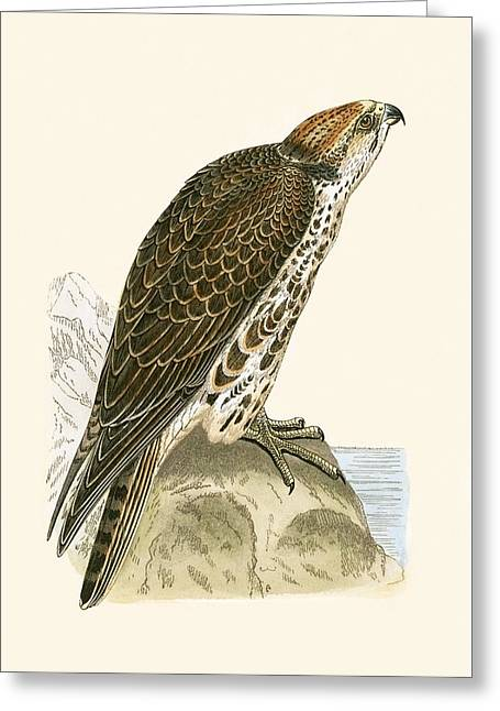 Saker Falcon Greeting Card by English School