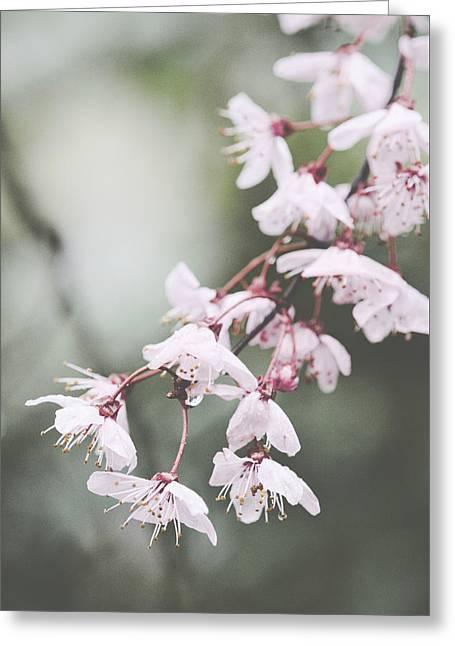 Sakura #278 Greeting Card