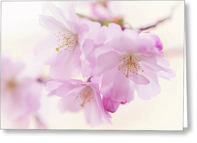 Sakura Bloom. Spring Pastels Greeting Card by Jenny Rainbow