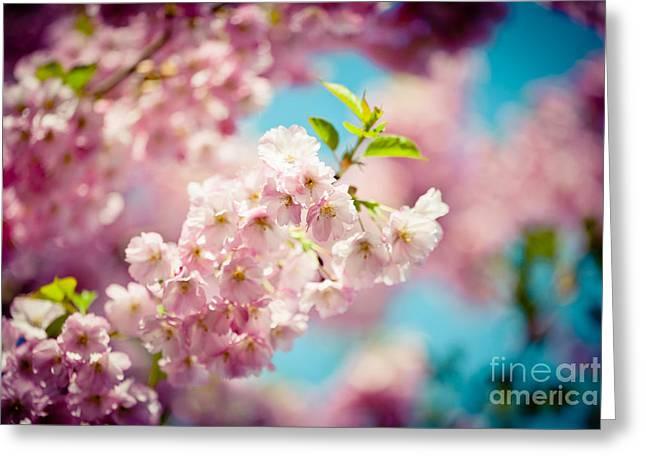 Sakura Blossoms Pink Cherry Artmif.lv Greeting Card by Raimond Klavins
