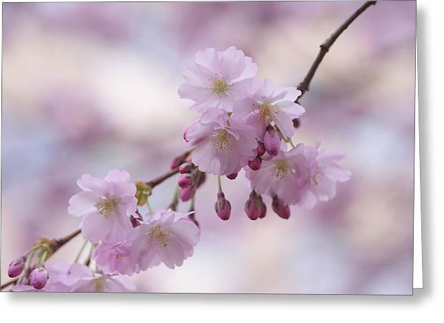 Sakura Branch. Spring Pastels Greeting Card by Jenny Rainbow