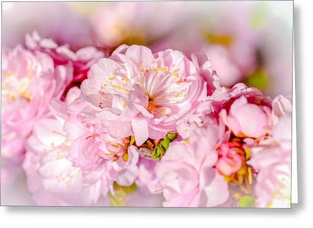 Greeting Card featuring the photograph Sakura Cherry Flower - Wedding Bouquet by Alexander Senin