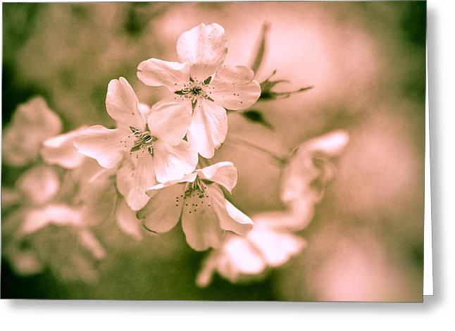 Sakura Iv Greeting Card by Jon Woodhams
