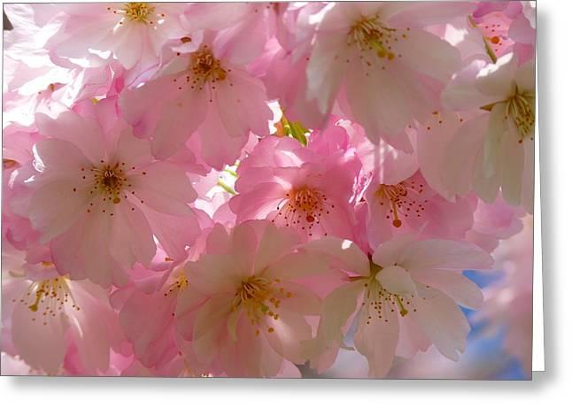 Sakura - Japanese Cherry Blossom Greeting Card
