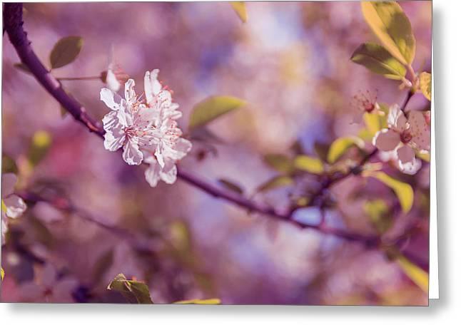 Sakura  Greeting Card by Thubakabra