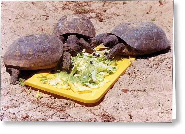 Salad Bar Greeting Card by Jan Amiss Photography