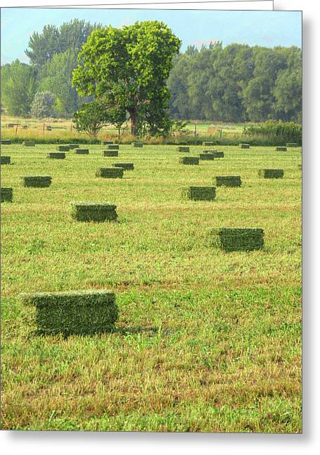 Greeting Card featuring the photograph Salem Hay Field by David King