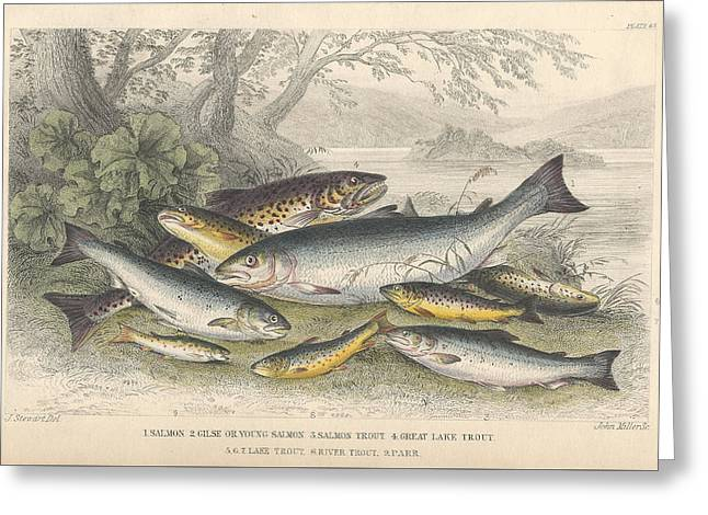 Salmon And Trout Greeting Card