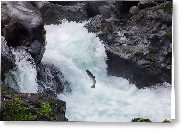 Salmon Cascades Greeting Card by Crystal Hoeveler