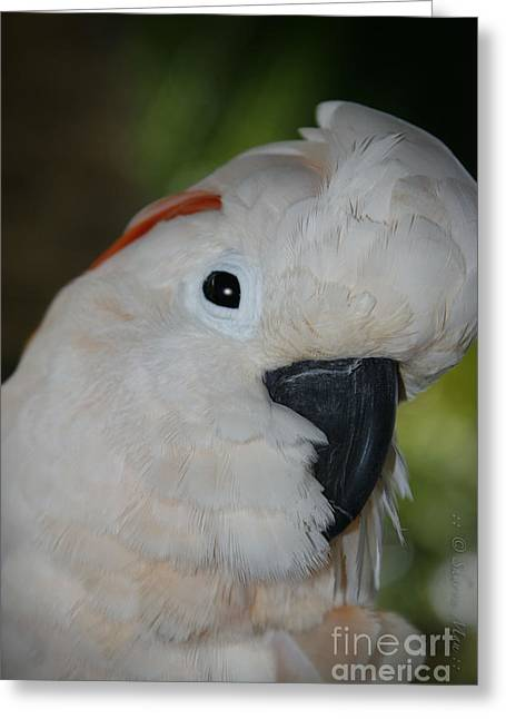 Salmon Crested Cockatoo Greeting Card by Sharon Mau