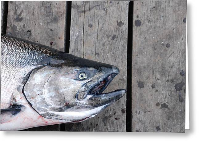 Salmon On Deck Greeting Card