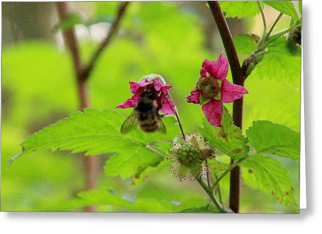 Salmonberry Honey Greeting Card