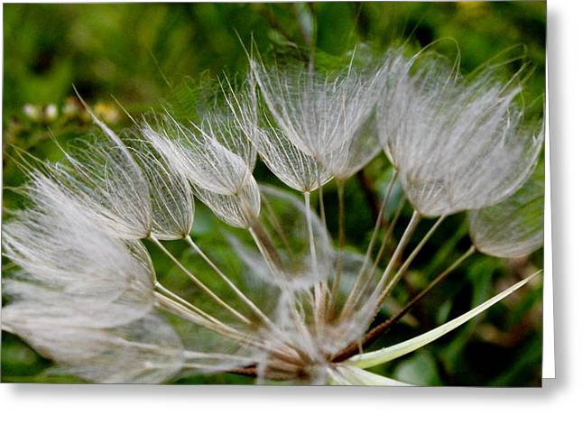 Salsify  Greeting Card