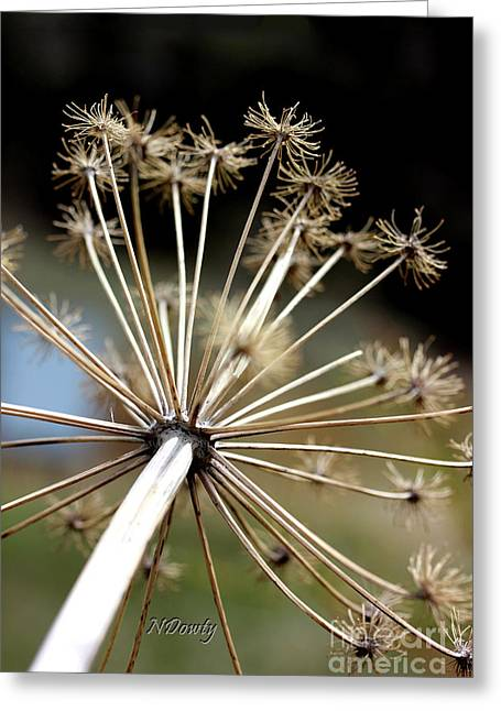 Salsify Stems Greeting Card