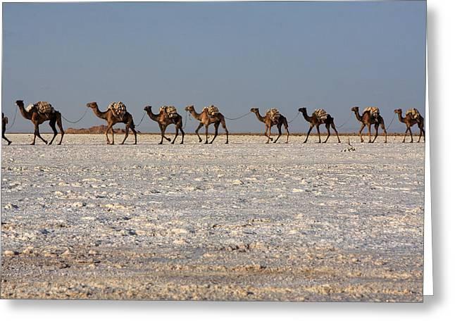 Salt Flats, Danakil Depression, Ethiopia Greeting Card