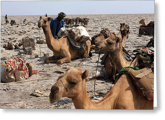 Salt Miners, Danakil Depression, Ethiopia Greeting Card