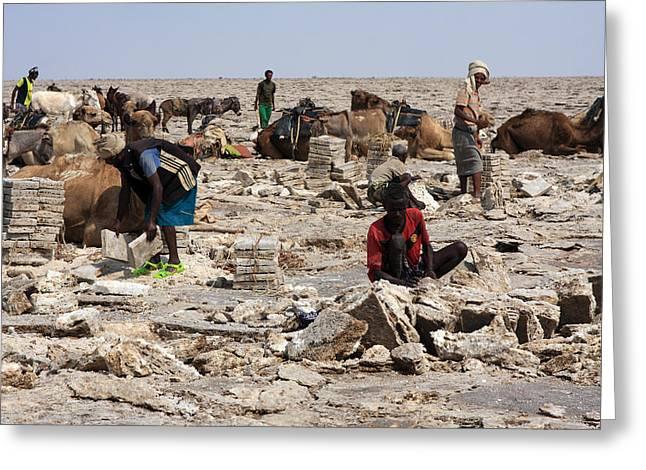 Salt Miners, Ethiopia Greeting Card