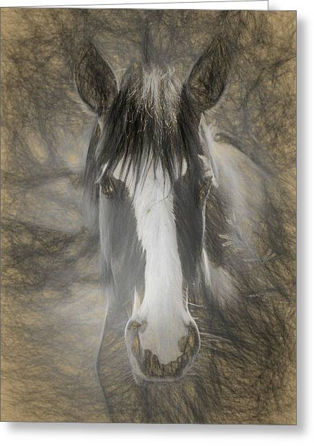 Salt River Stallion Greeting Card