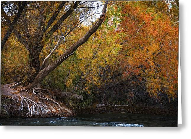 Salt River Under Brilliant Fall Colors Greeting Card by Dave Dilli
