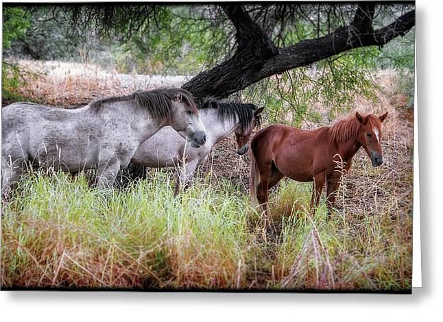 Salt River Wild Horses Greeting Card